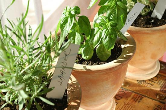 coltivare-orto-in-casa