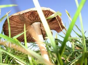 ecologia orto e giardino