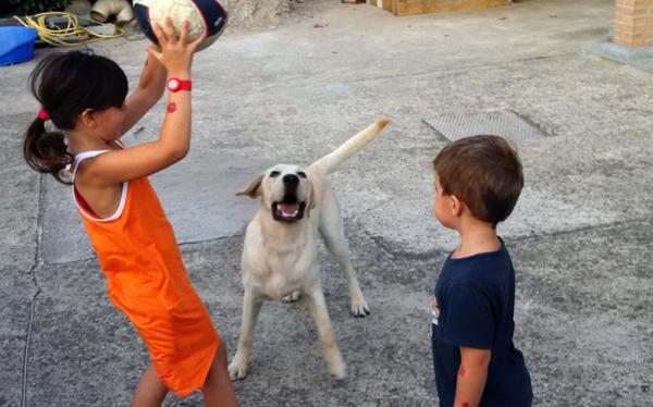 animale-domestico