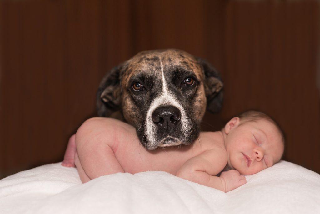 come abituare il cane all'arrivo di un bebè